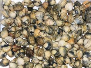 salad razor clams salad